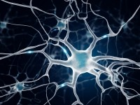 "The project is titled ""Developing an ethical, sustainable, human sensory neuron cell culture model for use in therapeutic pain research,"" or DRGNET. (Image: iStock/bodym)"