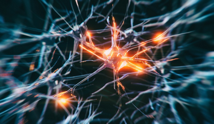Treg cell therapy showing promise in ALS trials: Coya Therapeutics